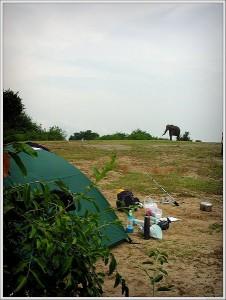 Слон, крадущийся к палатке