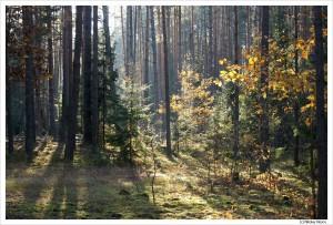 Клип о поездке в Беловежскую пущу осенью 2012 г. 8