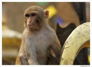 Храм обезьян