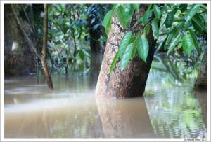 Бразилия. Амазонка