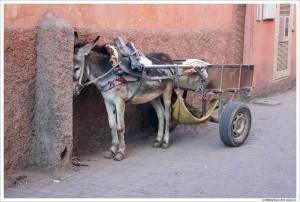 Тележка с осликом - основной вид транспорта в Медине
